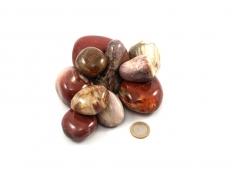 Petrified Wood XL Tumbled Stones - 1 lb