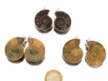 Fossil Ammonite Pendants - 1 pair