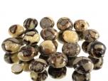 Septarian Nodule XL Tumbled Stones - 1 lb