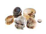 Dendritic Agate XL Tumbled Stones - 1 lb